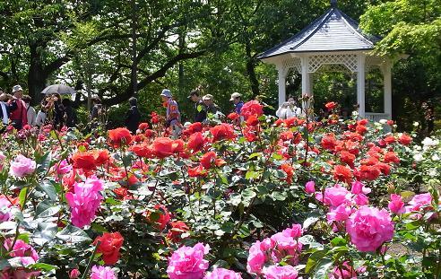 花を愛でながら横浜山手西洋館めぐり_c0192215_5491233.jpg