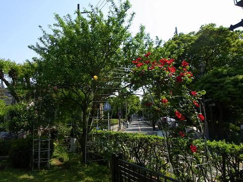 花を愛でながら横浜山手西洋館めぐり_c0192215_6344652.jpg