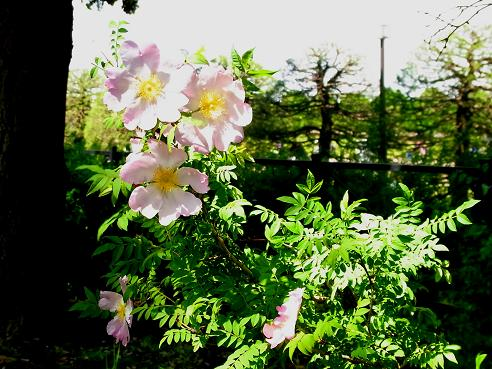 花を愛でながら横浜山手西洋館めぐり_c0192215_674248.jpg
