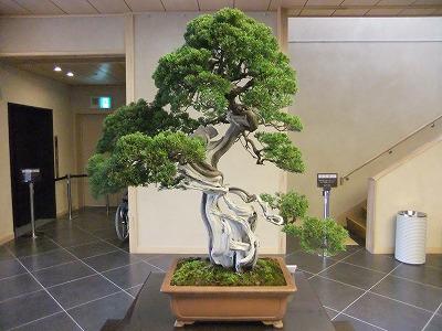 さいたま探訪(7)~大宮盆栽美術館・清香園_e0173645_1929268.jpg