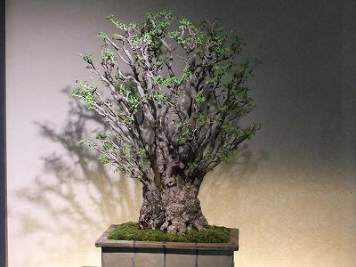 さいたま探訪(7)~大宮盆栽美術館・清香園_e0173645_19322685.jpg