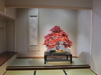 さいたま探訪(7)~大宮盆栽美術館・清香園_e0173645_19333827.jpg