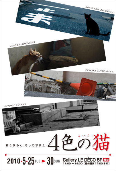 「4色の猫グループ展」お知らせ_c0165046_955636.jpg
