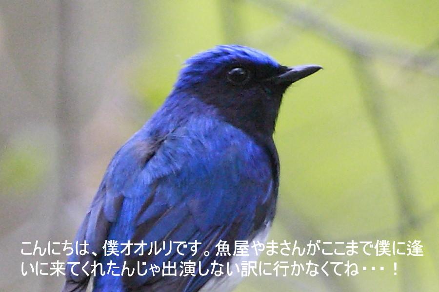 c0217255_2144063.jpg