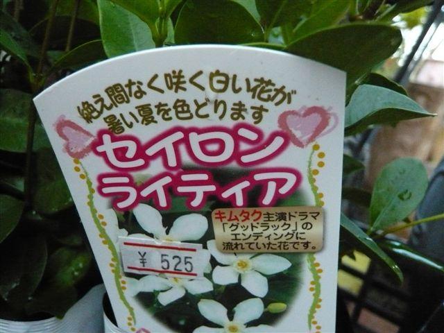 これから、雨、猛暑の季節・・・・・雨にも暑さにもめげない花を植えましょう_b0137969_1935352.jpg