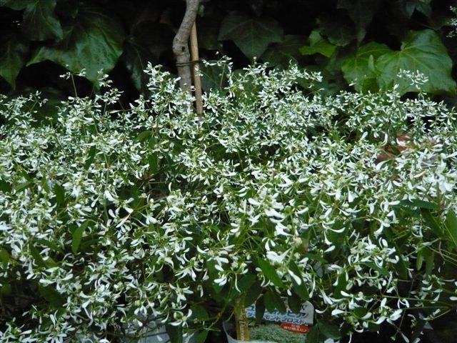 これから、雨、猛暑の季節・・・・・雨にも暑さにもめげない花を植えましょう_b0137969_19392968.jpg