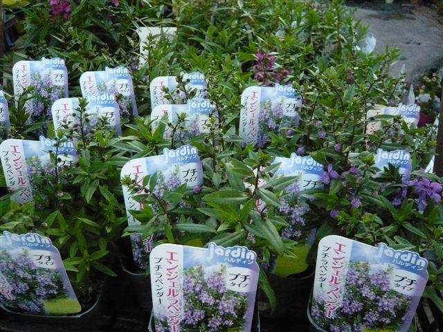 これから、雨、猛暑の季節・・・・・雨にも暑さにもめげない花を植えましょう_b0137969_19471120.jpg