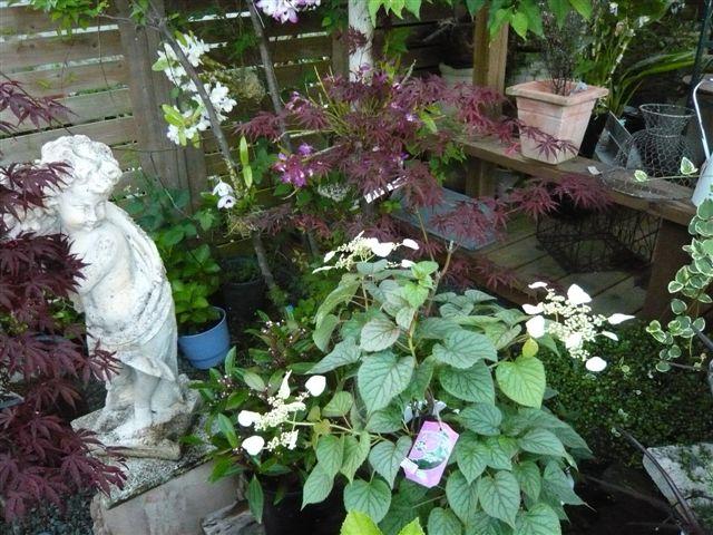 これから、雨、猛暑の季節・・・・・雨にも暑さにもめげない花を植えましょう_b0137969_1959322.jpg
