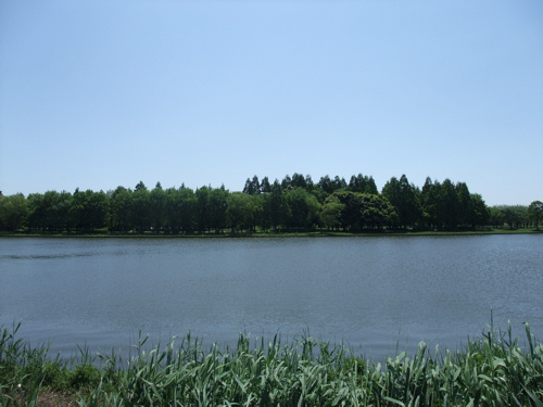 初夏の公園_c0173978_1211540.jpg