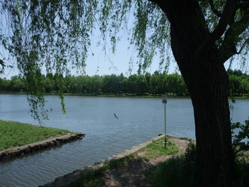 初夏の公園_c0173978_1212562.jpg