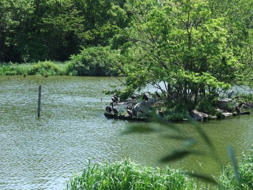 初夏の公園_c0173978_1221614.jpg