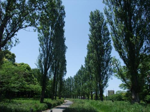 初夏の公園_c0173978_1232678.jpg