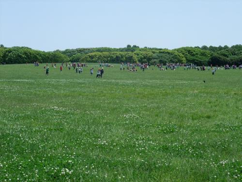 初夏の公園_c0173978_1233966.jpg