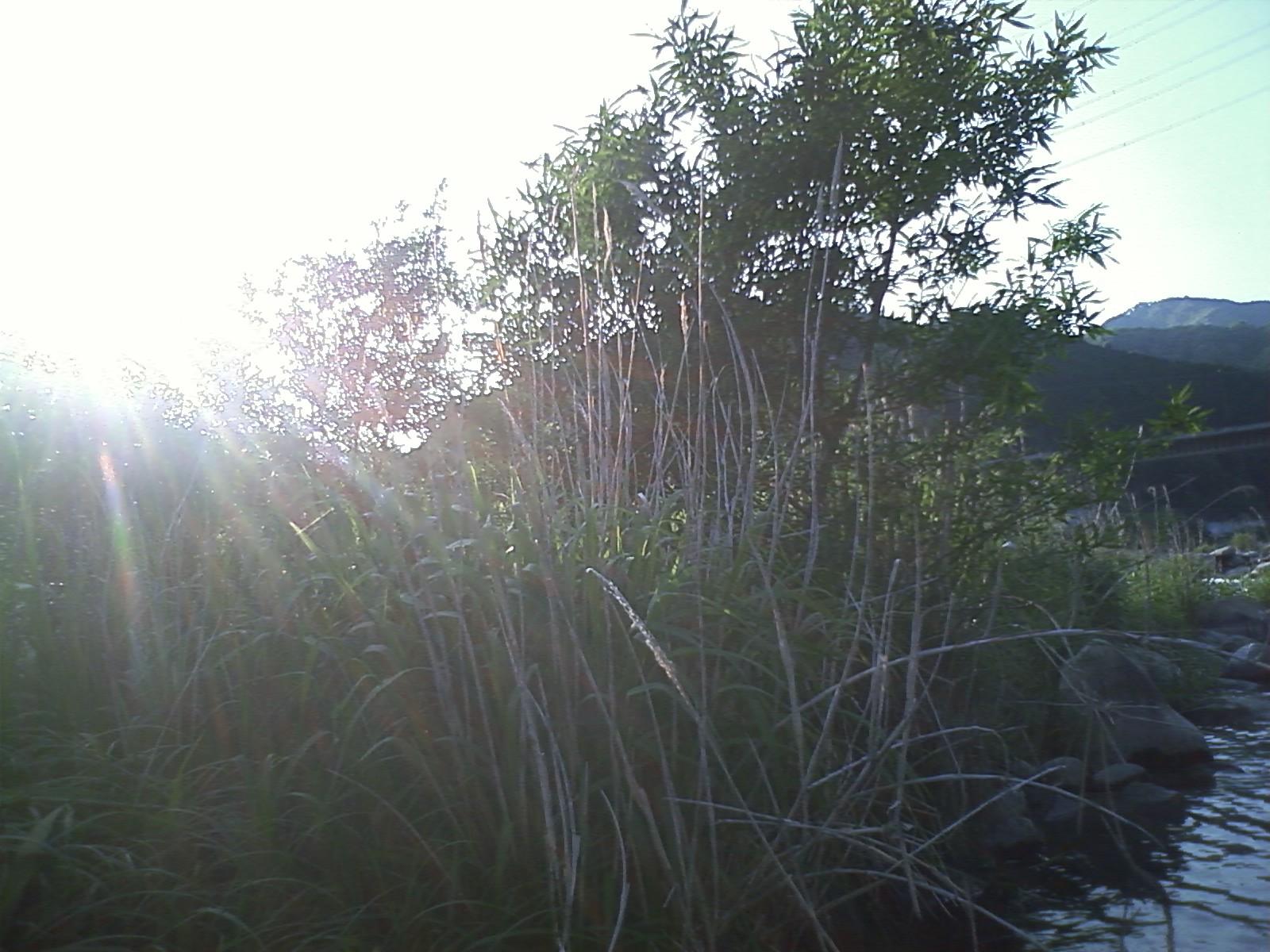 b0031493_2012174.jpg