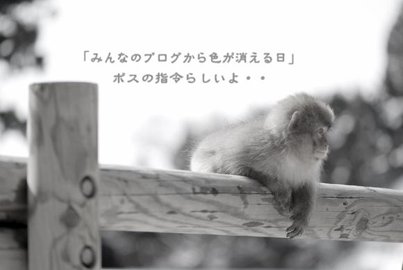 c0091505_1616196.jpg