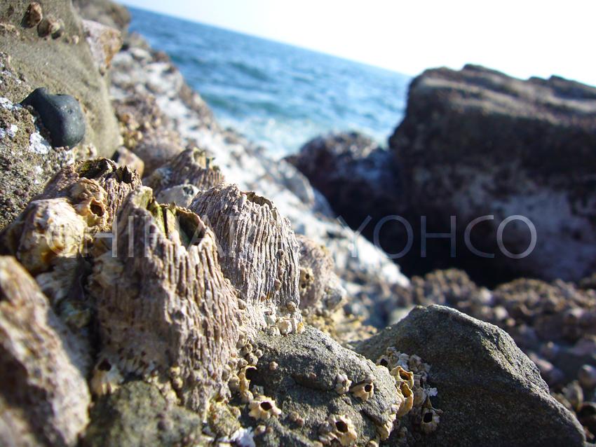 海辺の一日_b0025511_2373262.jpg