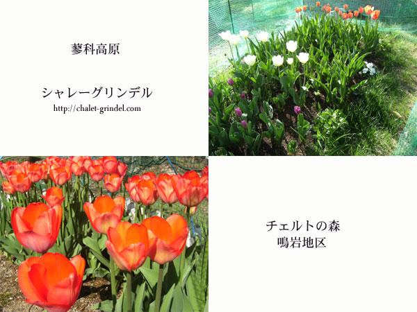 d0109415_16245134.jpg