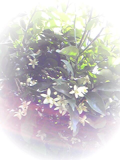 幸せな香り♪_d0085018_14444314.jpg