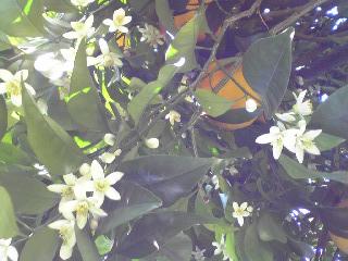 幸せな香り♪_d0085018_1584988.jpg
