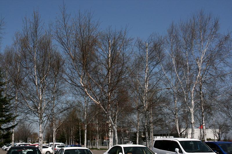 2010年5月中旬 春の十勝遠征_d0054625_2133674.jpg