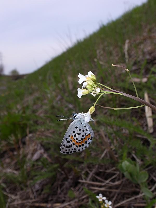 2010年5月中旬 春の十勝遠征_d0054625_21493382.jpg