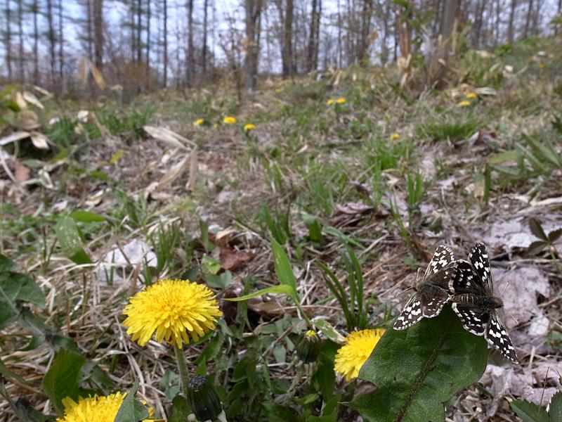 2010年5月中旬 春の十勝遠征_d0054625_22432651.jpg