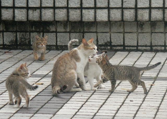 優しい母猫と甘える仔猫 _f0214527_15394819.jpg