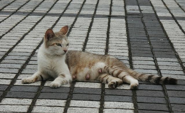 公園のホームレス猫たち  23   仔育て中_f0214527_15411541.jpg