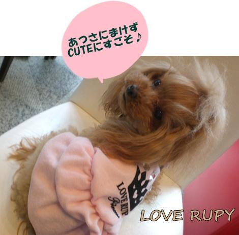 RUPY新作入荷しました。_b0084929_17221833.jpg