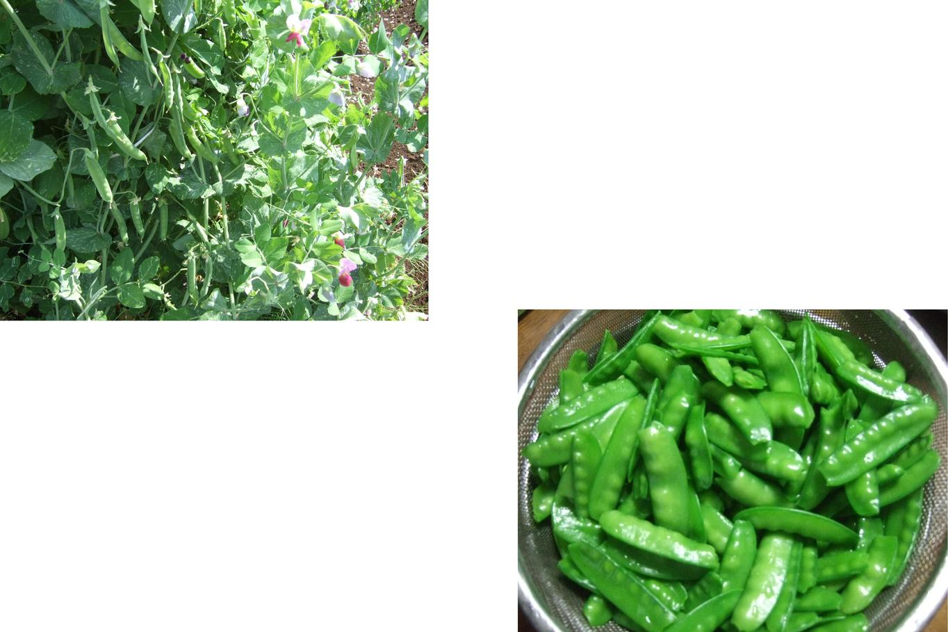 野菜づくしの食卓....健康になりますか?_b0137932_18442994.jpg