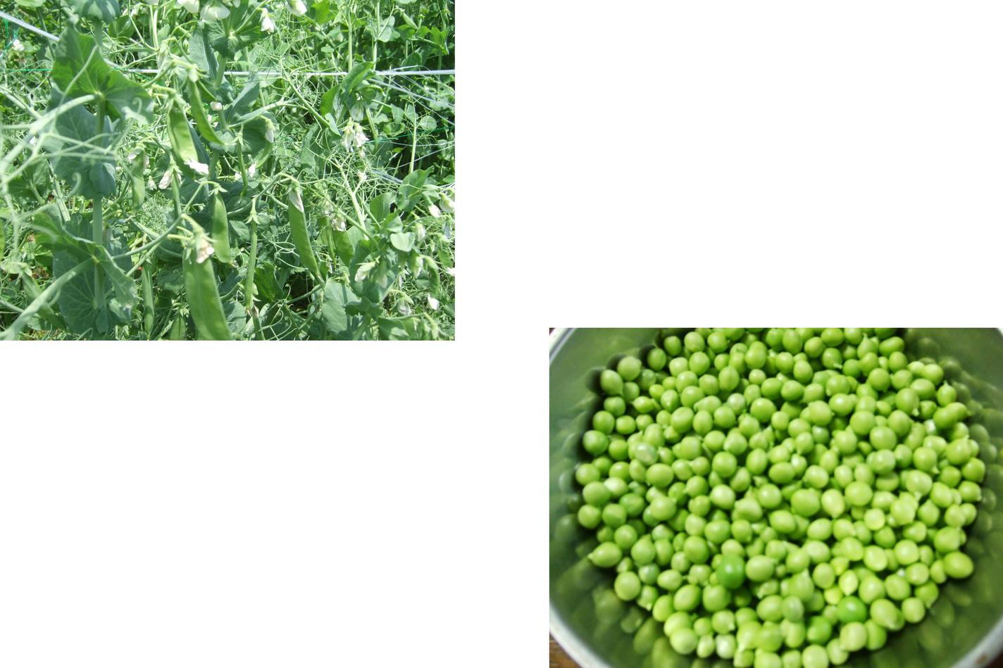 野菜づくしの食卓....健康になりますか?_b0137932_18451989.jpg