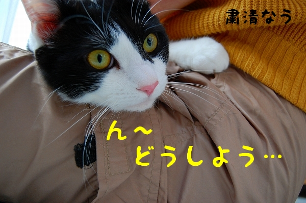 c0181639_0275270.jpg