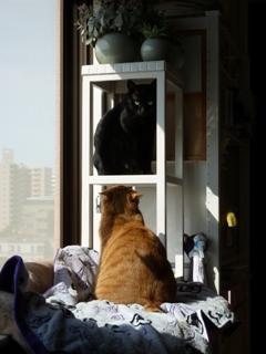 走るのだいすき猫 しぇるのぇる編。_a0143140_1452697.jpg