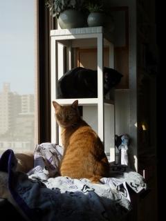走るのだいすき猫 しぇるのぇる編。_a0143140_146741.jpg