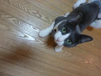 猫のお友だち 祿太くん編。_a0143140_19445388.jpg