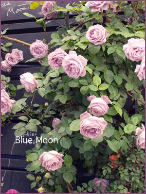国際バラとガーデニングショー_e0158653_2249548.jpg
