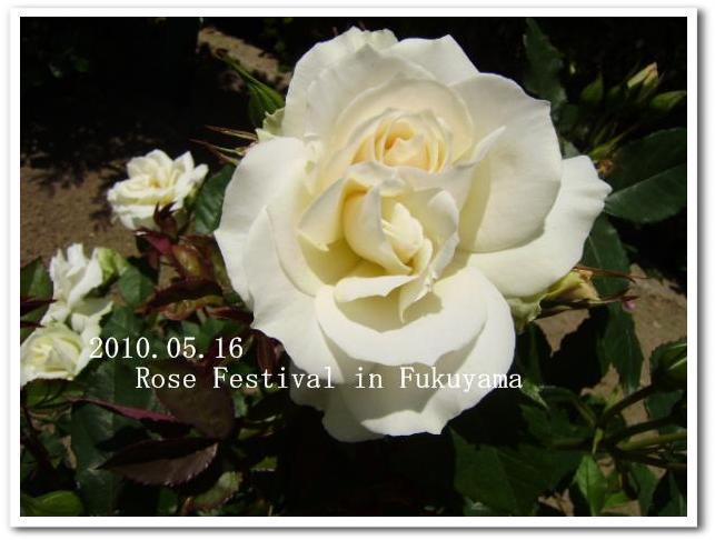 f0184055_10331586.jpg