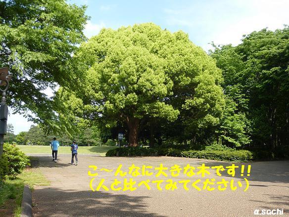 c0189388_1433878.jpg