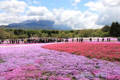 富士芝桜まつり開催中_c0193896_0272496.jpg
