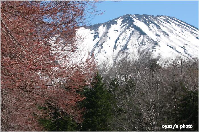 春だね~~_a0071514_2063881.jpg