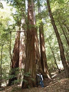 緑の癒し Big Basin Redwoods State Park_b0180714_12573294.jpg