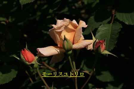 c0036016_15235522.jpg
