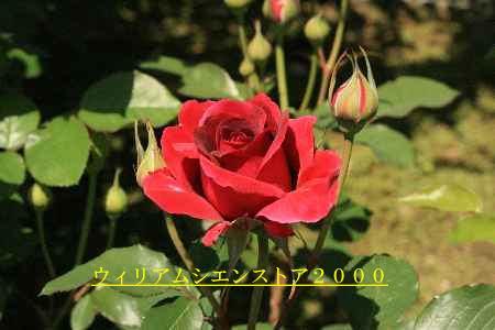 c0036016_1525136.jpg