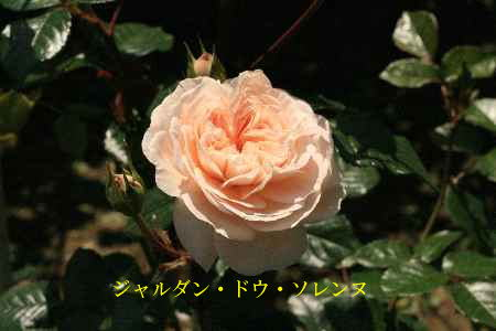 c0036016_15253684.jpg