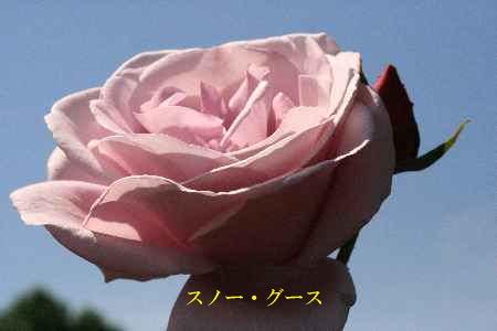 c0036016_15263384.jpg