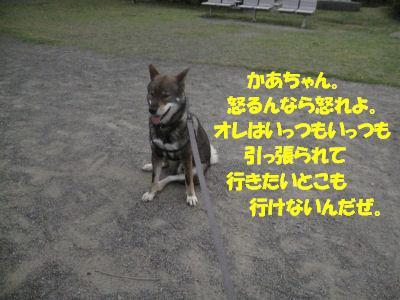 f0143123_20125241.jpg
