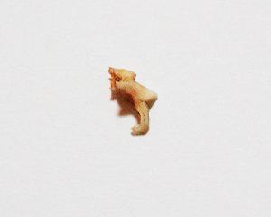 ラスクの2つ目の歯を発見_f0236951_923182.jpg