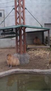 旭山動物園_e0163255_22591618.jpg