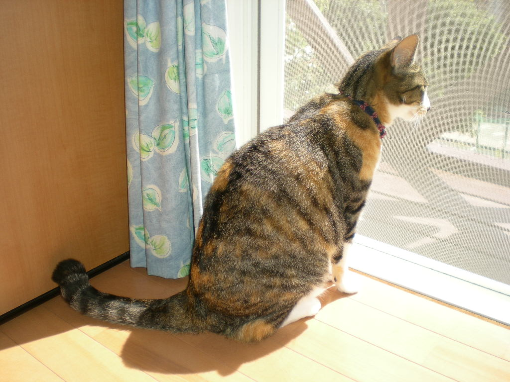 2010年5月18日(火)こころちゃんの今日の獲物!!!_f0060461_10323132.jpg