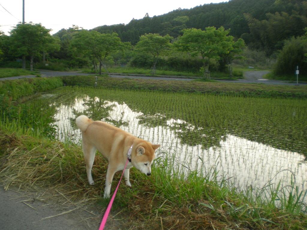 2010年5月18日(火)こころちゃんの今日の獲物!!!_f0060461_1065529.jpg